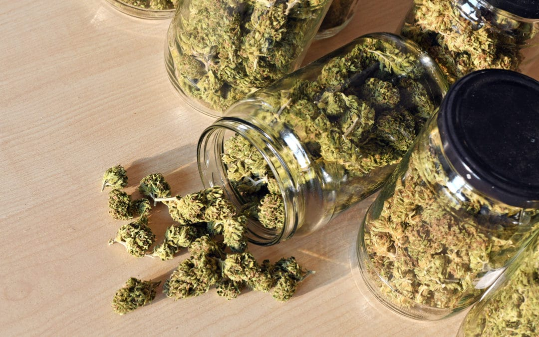 Dry And Trimmed Cannabis Buds Stored In A Glas Jars.